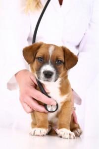 cabinet medicina veterinara